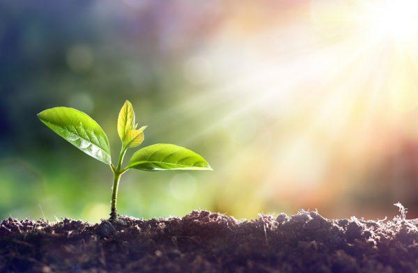 コツコツと育っている芽